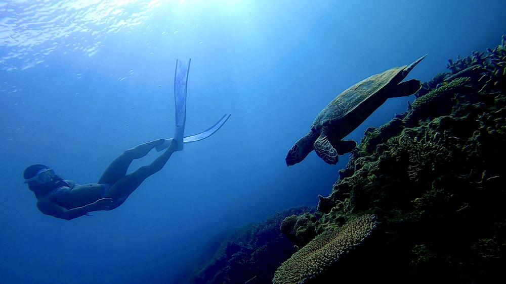 ウミガメやマダラトビエイ、ネムリブカに会えたりすることも。