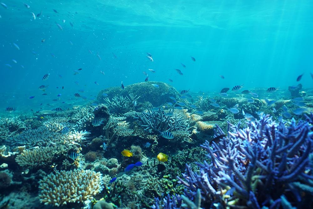 ダイヤモンドビーチ水中はたくさんの熱帯魚とサンゴでとてもカラフルです。